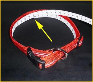 leuchtie-collar-measure.jpg
